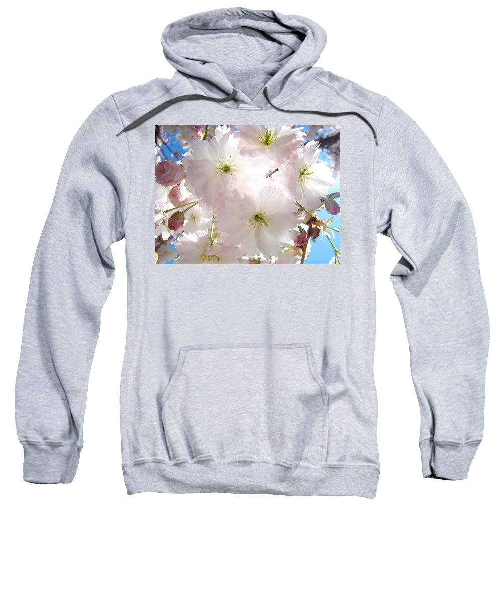 Blossom Sweatshirt featuring the photograph Sunlit Pink Blossoms Art Print Spring Tree Blossom Baslee by Baslee Troutman