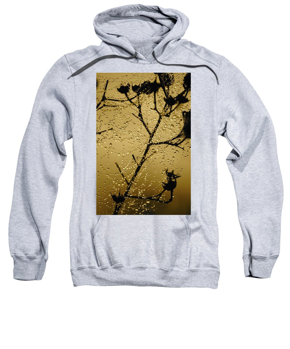 Dewdrops On Spider Web Sweatshirt featuring the photograph Sunrise Sparkle by Carol Groenen
