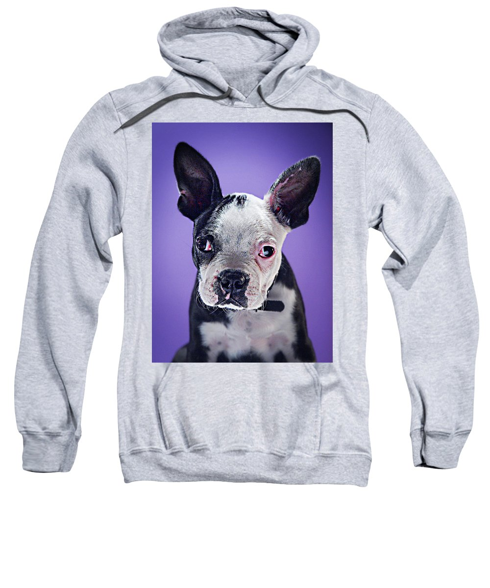 Pets Sweatshirt featuring the photograph Super Pets Series 1 - Bugsy Close Up by Arturo Parada