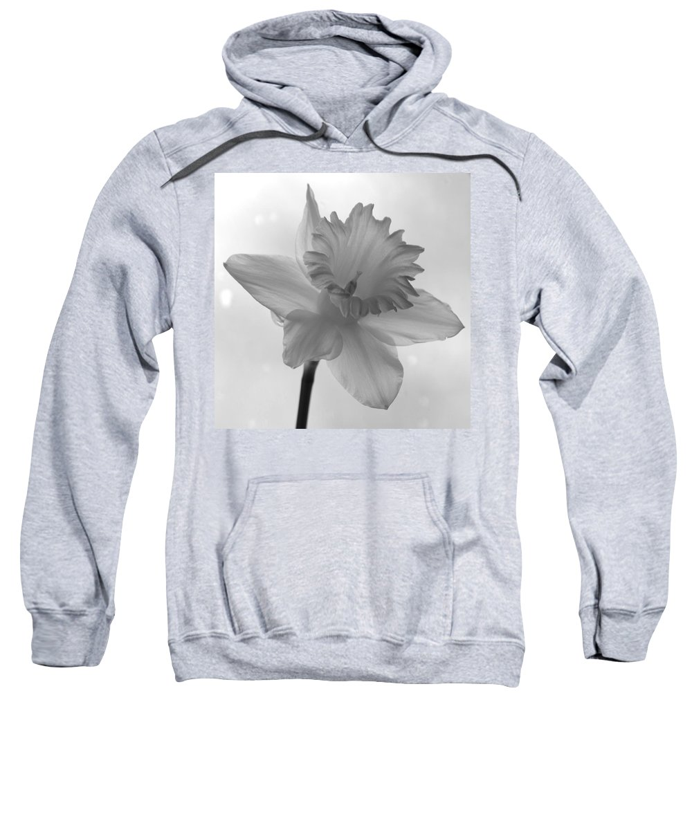 Impression Daffodil Whtie Nature Sweatshirt featuring the photograph Surfacing Image Of A Daffodil by Sheila Price