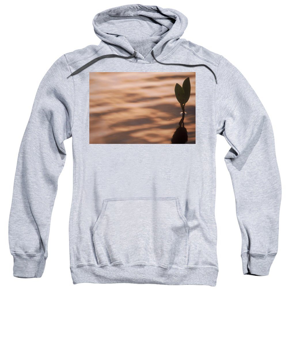 Nature Sweatshirt featuring the photograph Surfacing Mangrove by Kimberly Mohlenhoff