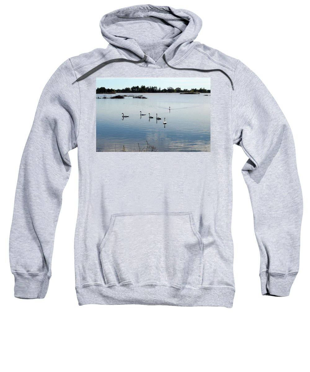 Seney National Wildlife Refuge Sweatshirt featuring the photograph Swan Hangout by Linda Kerkau