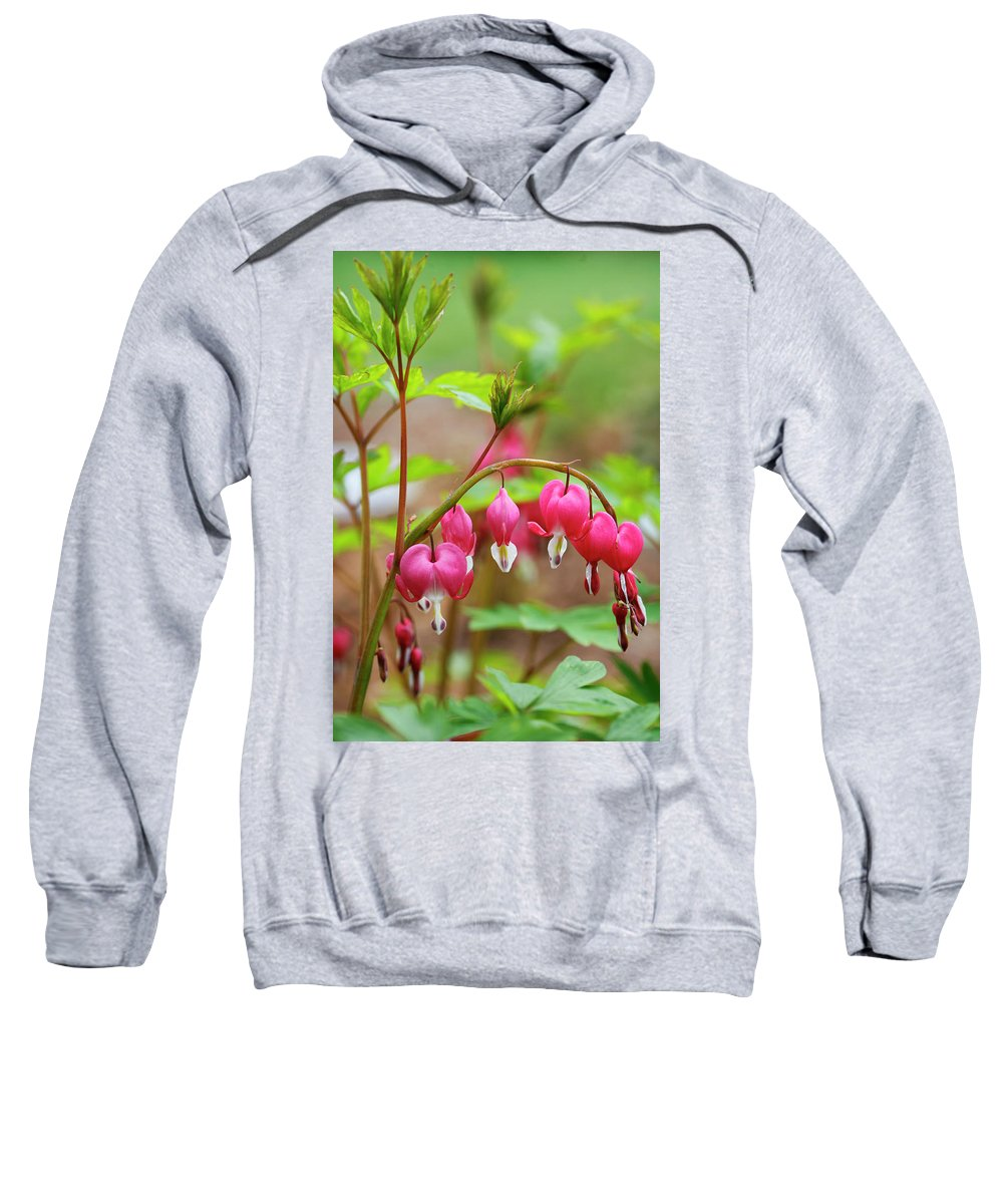 Sweet Sweatshirt featuring the photograph Sweet Bleeding Heart by Marilyn Hunt
