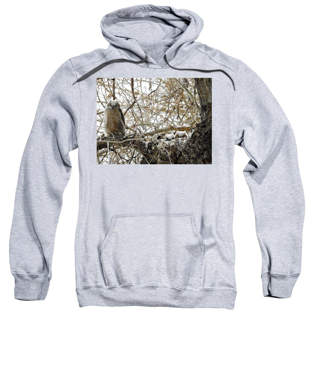 Owl Sweatshirt featuring the photograph Sweet Owlets by Nicole Belvill