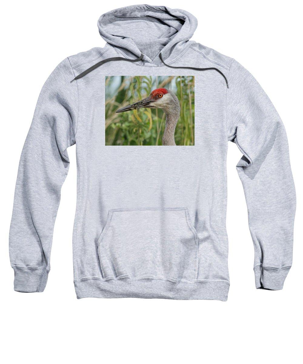 Sandhill Crane Sweatshirt featuring the photograph Sweet Sandie by Jayne Gulbrand
