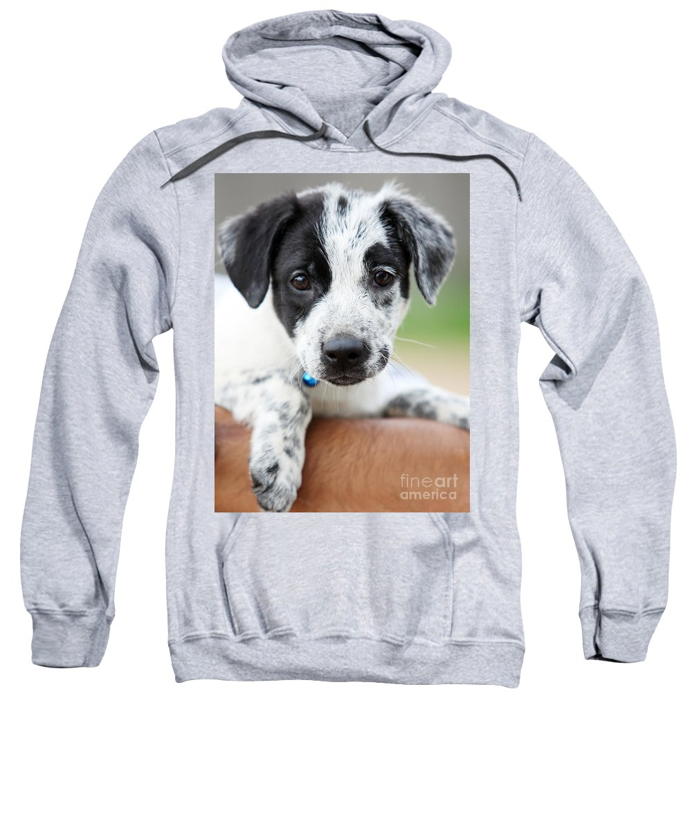 Puppy Sweatshirt featuring the photograph Sweetness by Amanda Barcon