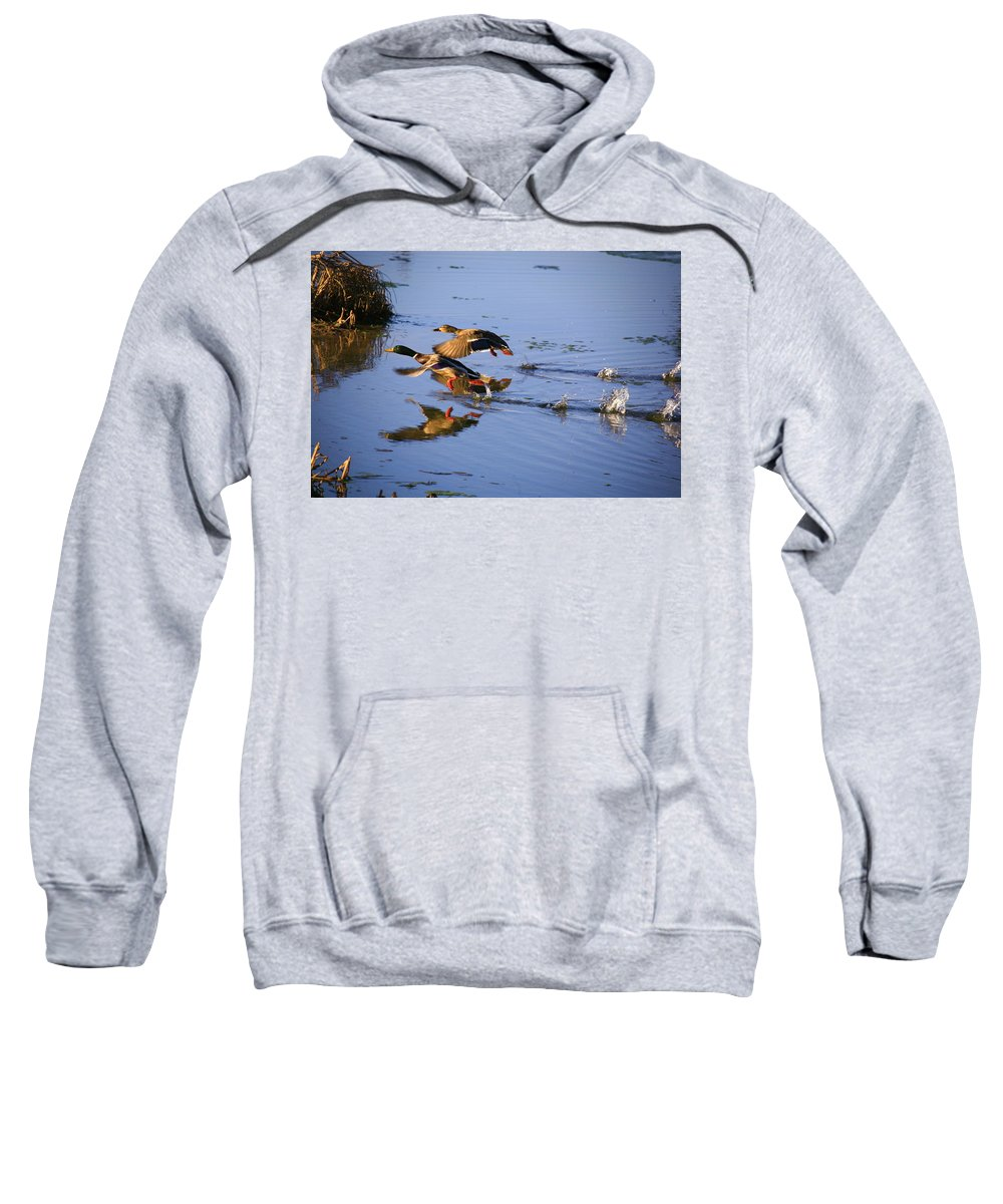 Duck Sweatshirt featuring the photograph Take Off by Robert Pearson