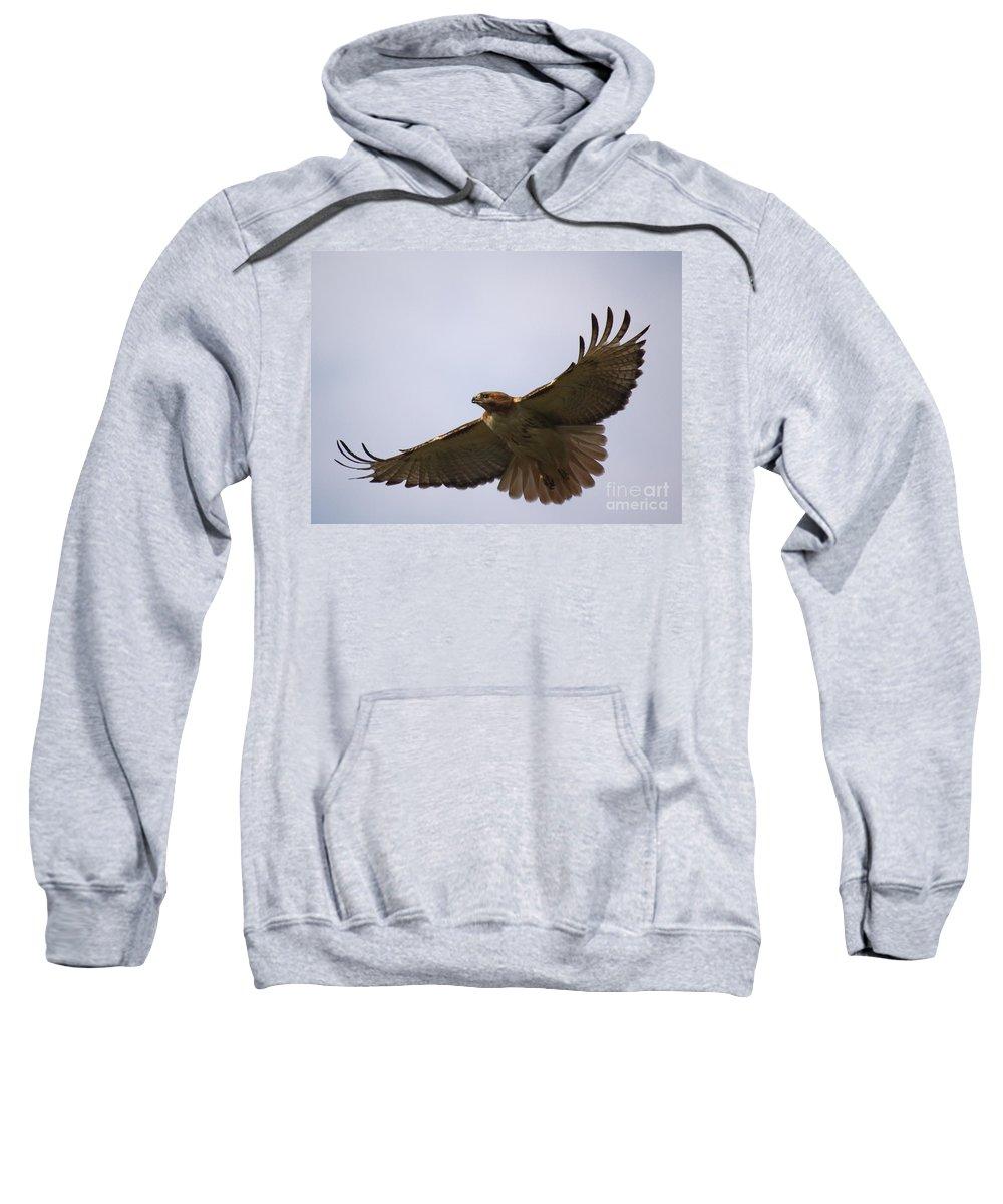 Hawk Sweatshirt featuring the photograph Taking Survey by Robert Pearson