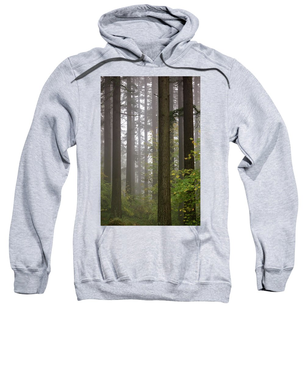 Trees Sweatshirt featuring the photograph Tall Drink Of Water by Wasim Muklashy
