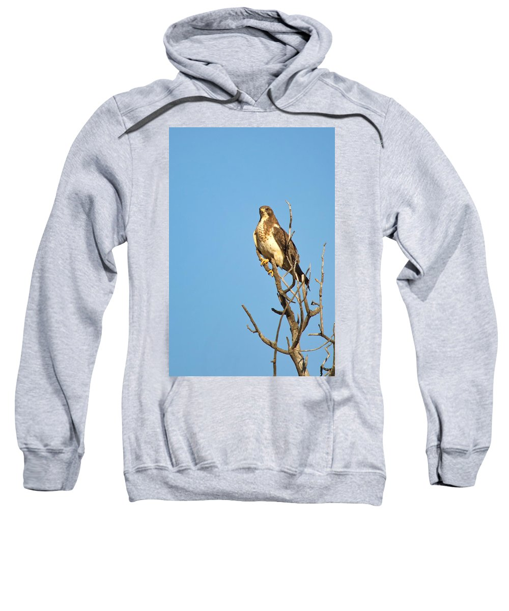 Nature Sweatshirt featuring the photograph Tall N Proud by Crystal Massop
