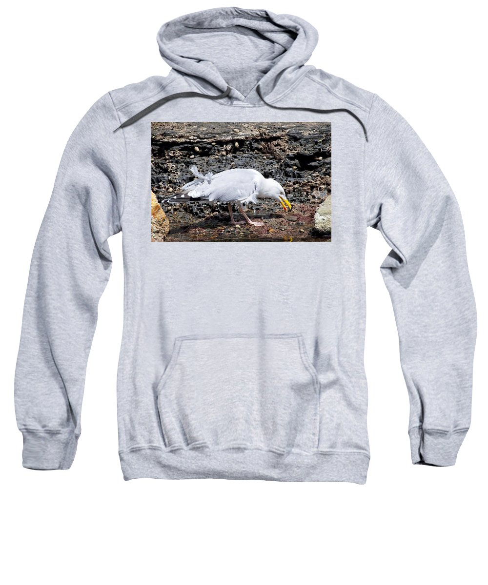Seagull Sweatshirt featuring the photograph Tasty Crab For Breakfast by Susie Peek