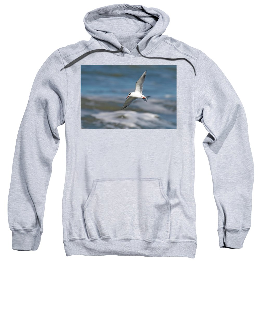 Bird In Flight Sweatshirt featuring the photograph Tern Over The Waves by Daniel Caracappa