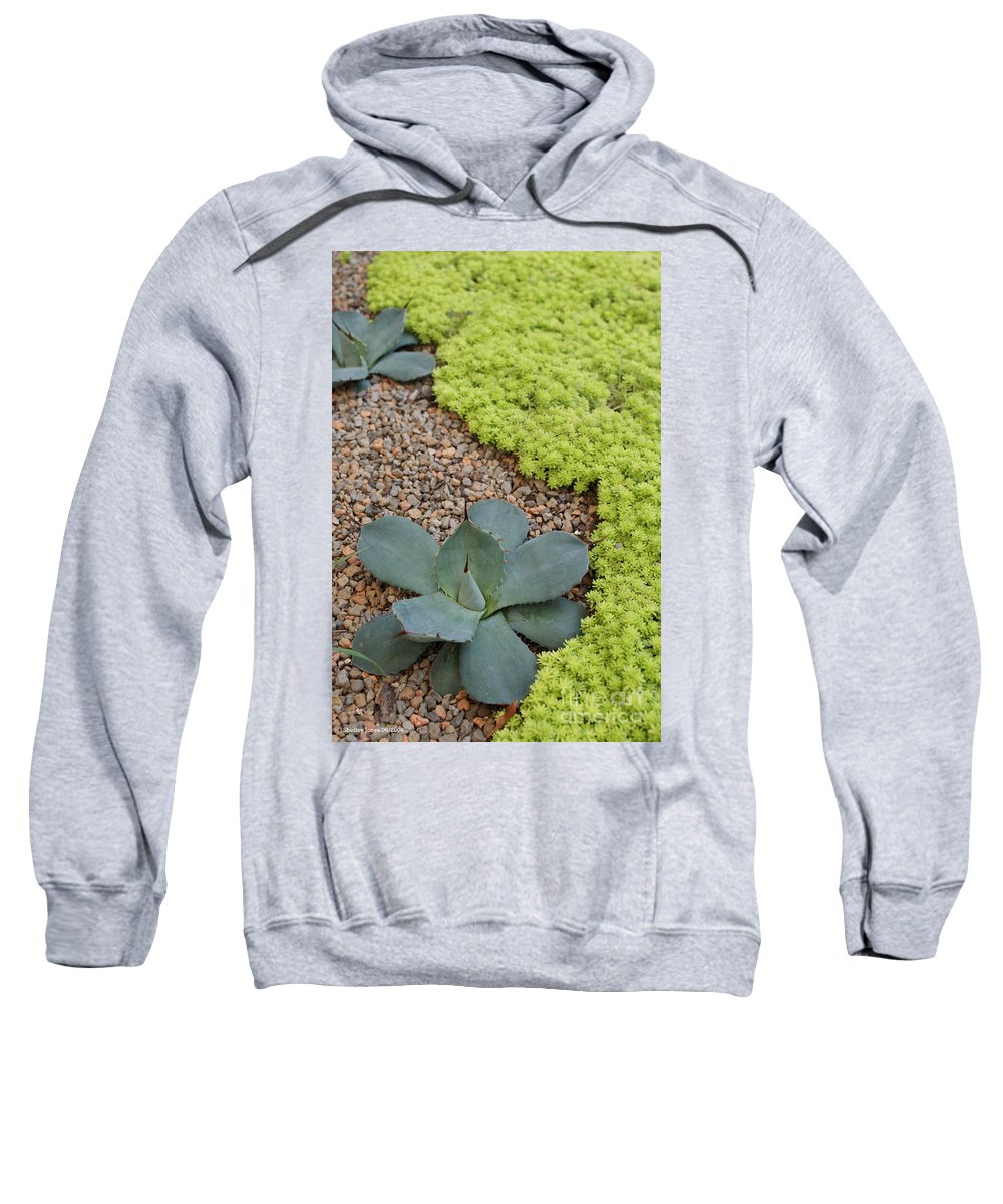 Cacti Sweatshirt featuring the photograph Texture by Shelley Jones