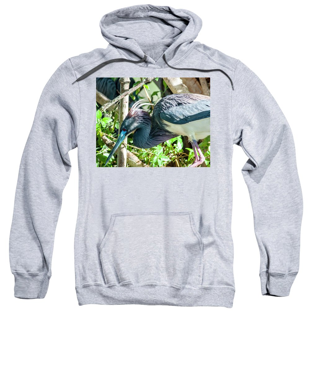 Tricolored Heron Sweatshirt featuring the photograph The Bends by Norman Johnson