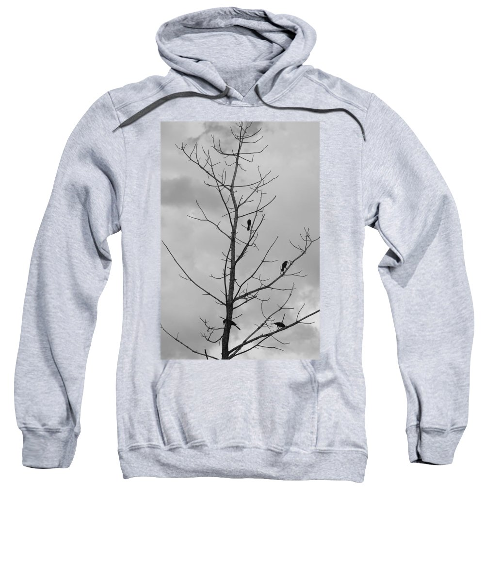 Tree Sweatshirt featuring the photograph The Birds by Rob Hans