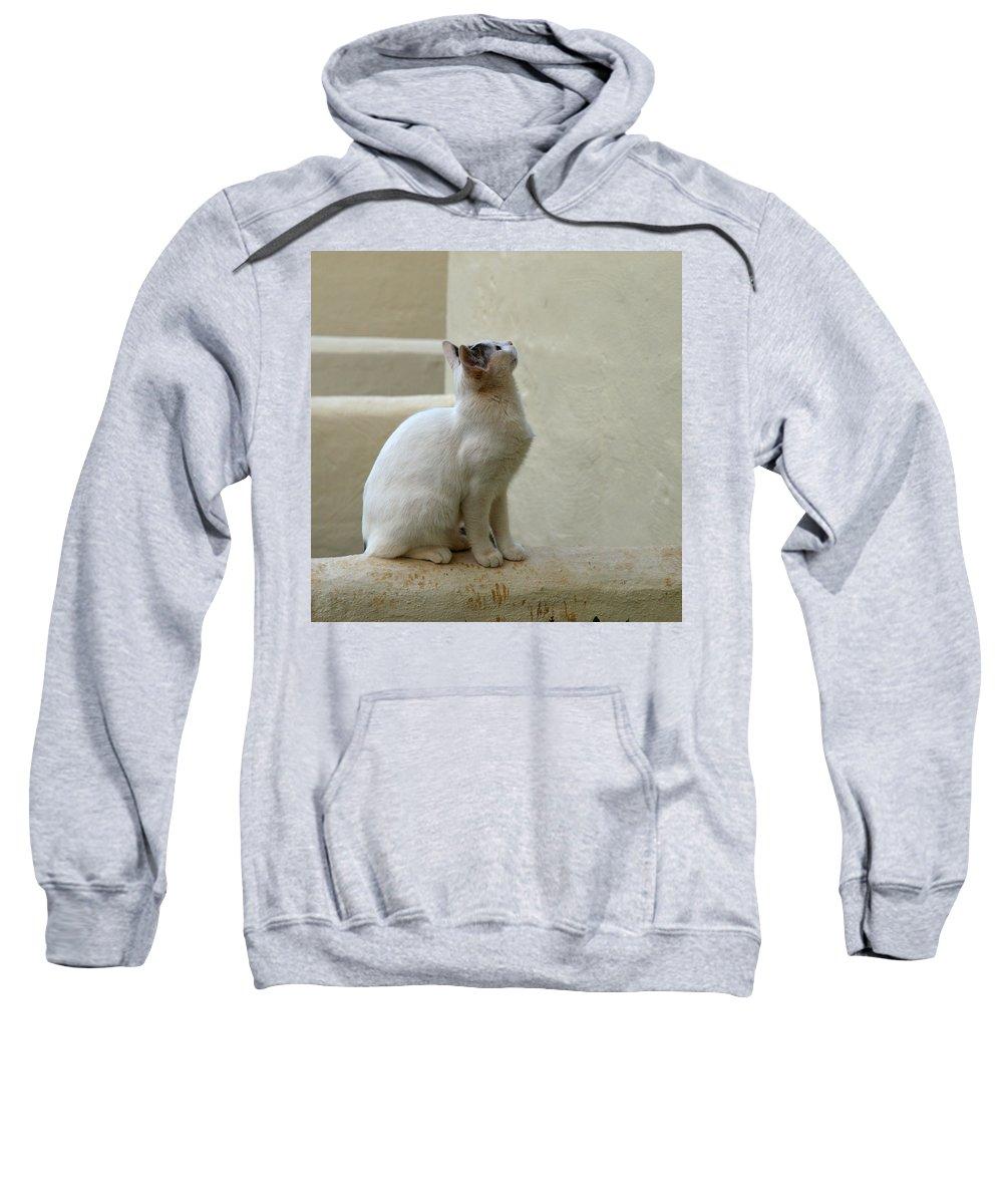 Landscape Sweatshirt featuring the photograph The Blond 5 by Jouko Lehto