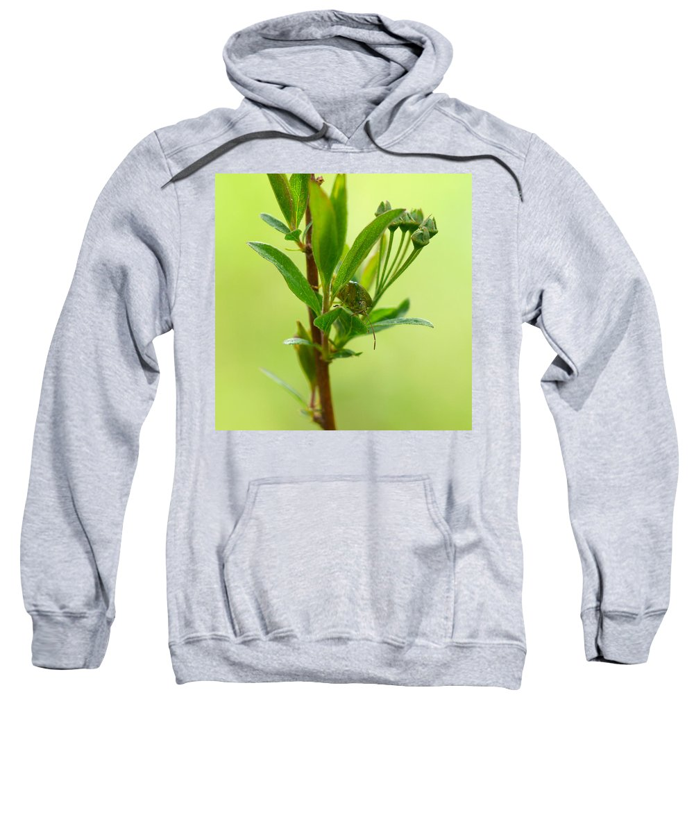 Lehtokukka Sweatshirt featuring the photograph The Bug by Jouko Lehto