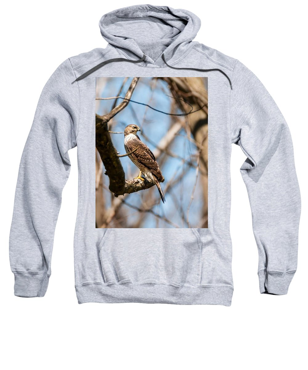 Cooper's Hawk Sweatshirt featuring the photograph The Cooper's Hawk by Heather Hubbard