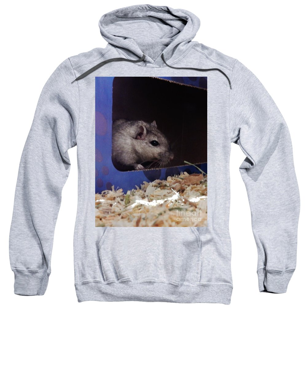 Gerbils Sweatshirt featuring the photograph The Crumpet Show by CL Redding