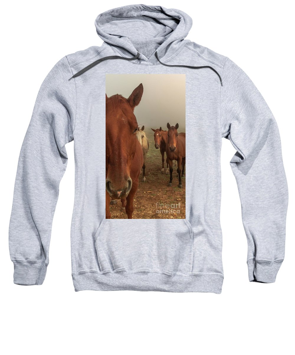 Animal Sweatshirt featuring the photograph The Gauntlet - Horses by Robert Frederick