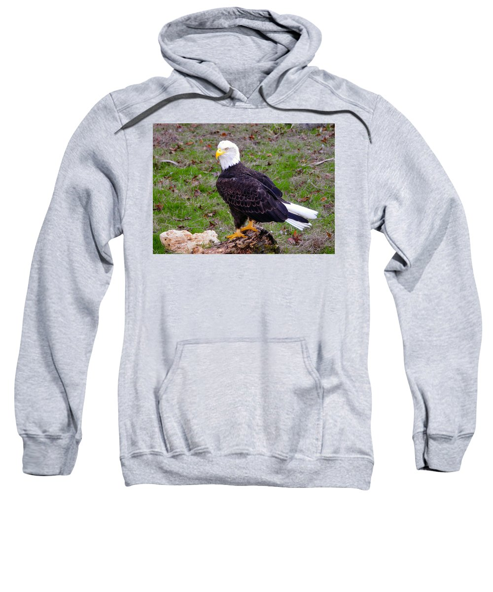 Bald Eagle Sweatshirt featuring the photograph The Great Bald Eagle by David Lee Thompson