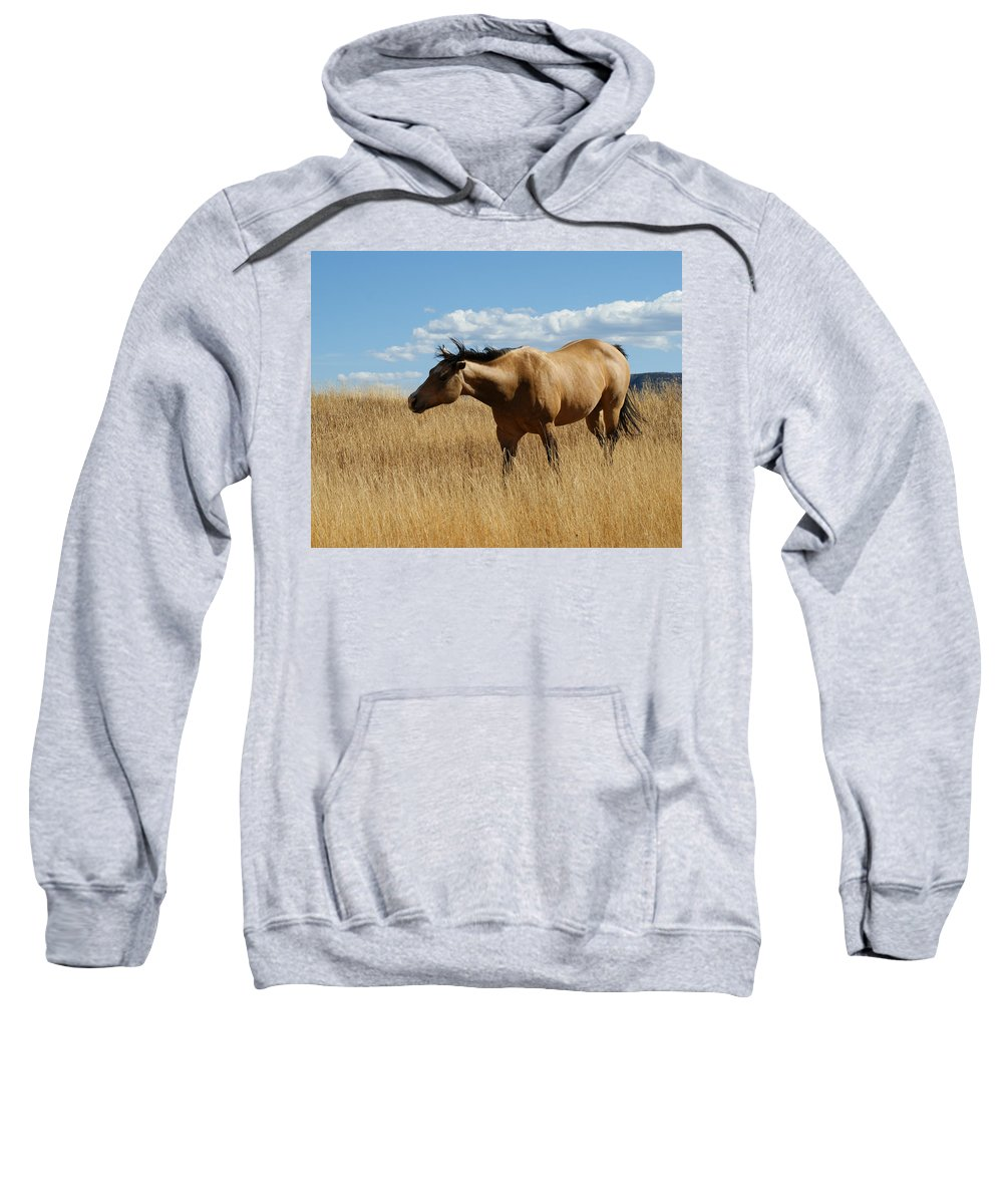 Horse Sweatshirt featuring the photograph The Horse by Ernie Echols