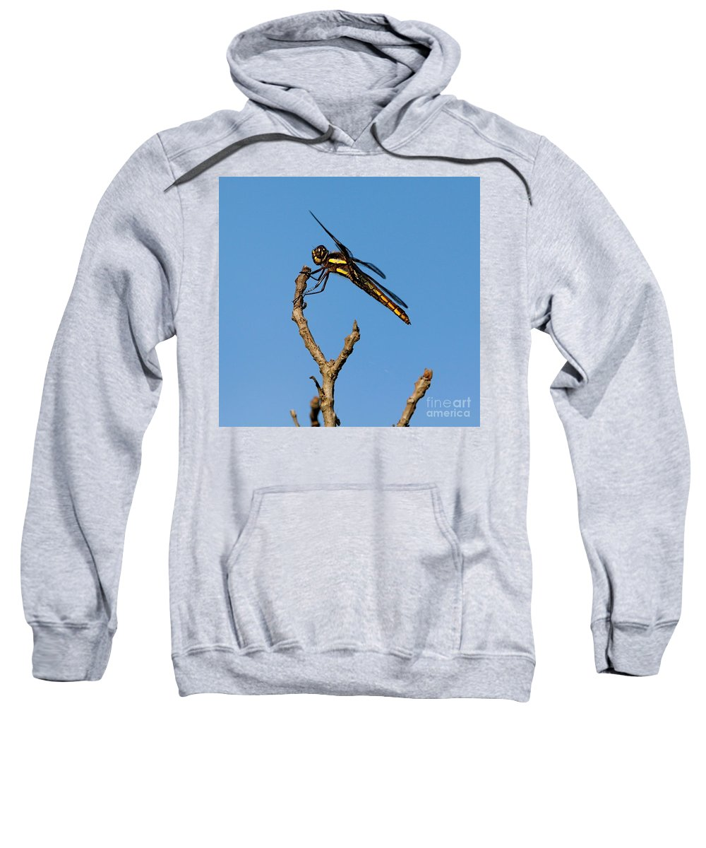 Insect Sweatshirt featuring the photograph The Landing Pad by Robert Pearson