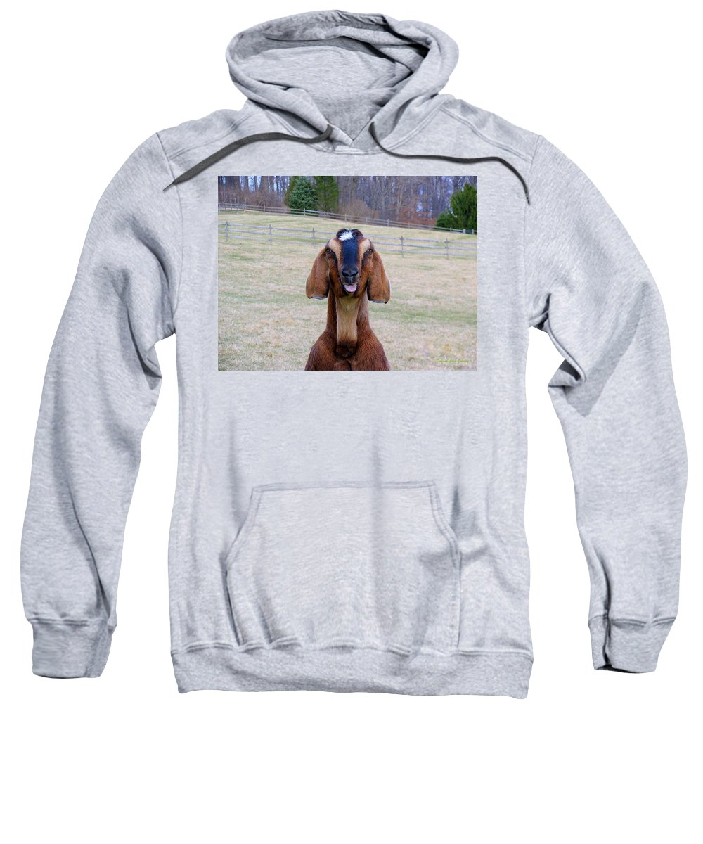 Animals Sweatshirt featuring the photograph The Name Is Billy... by Deborah Crew-Johnson