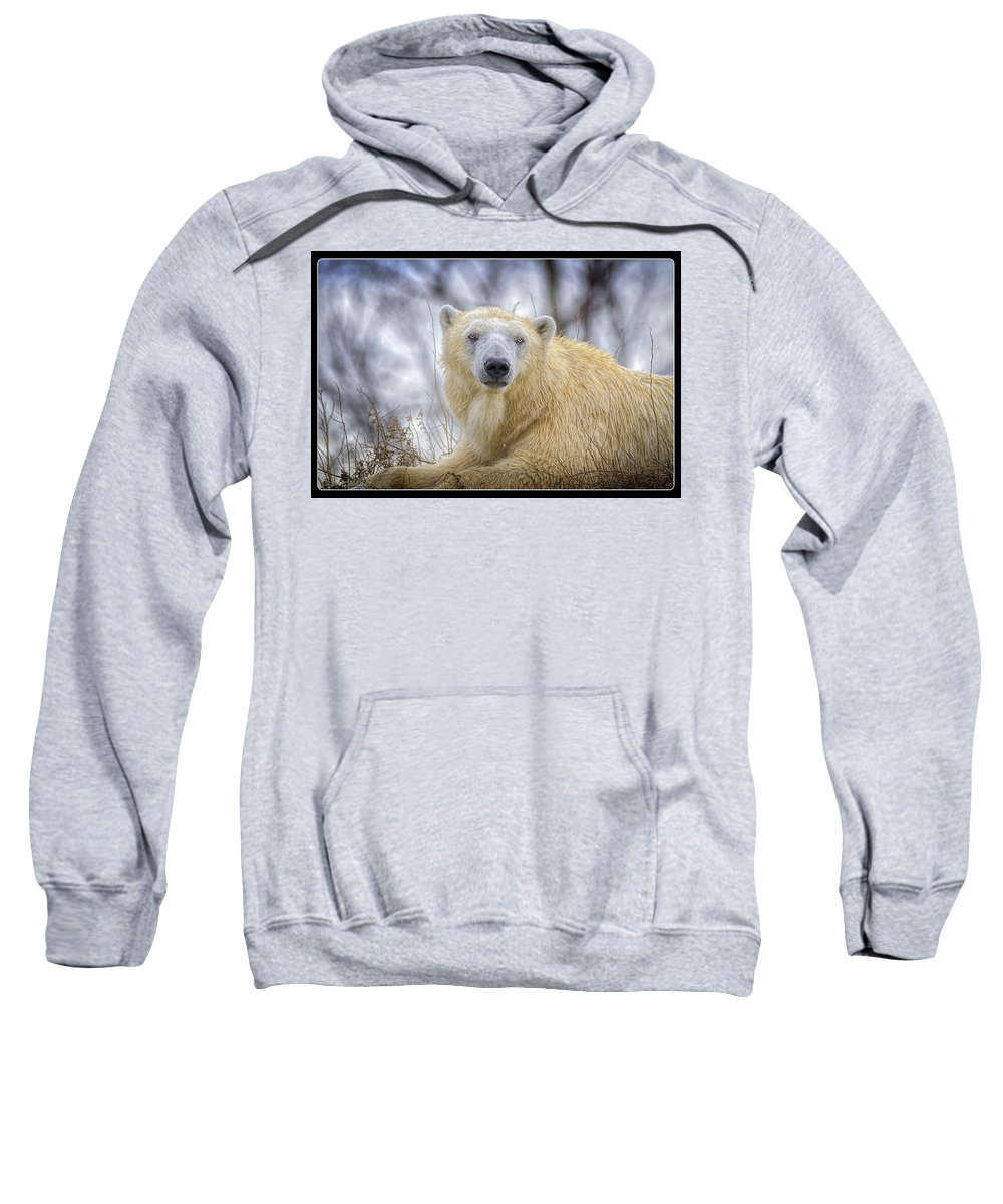 Polar Bear Sweatshirt featuring the photograph The Polar Bear Stare by LeeAnn McLaneGoetz McLaneGoetzStudioLLCcom