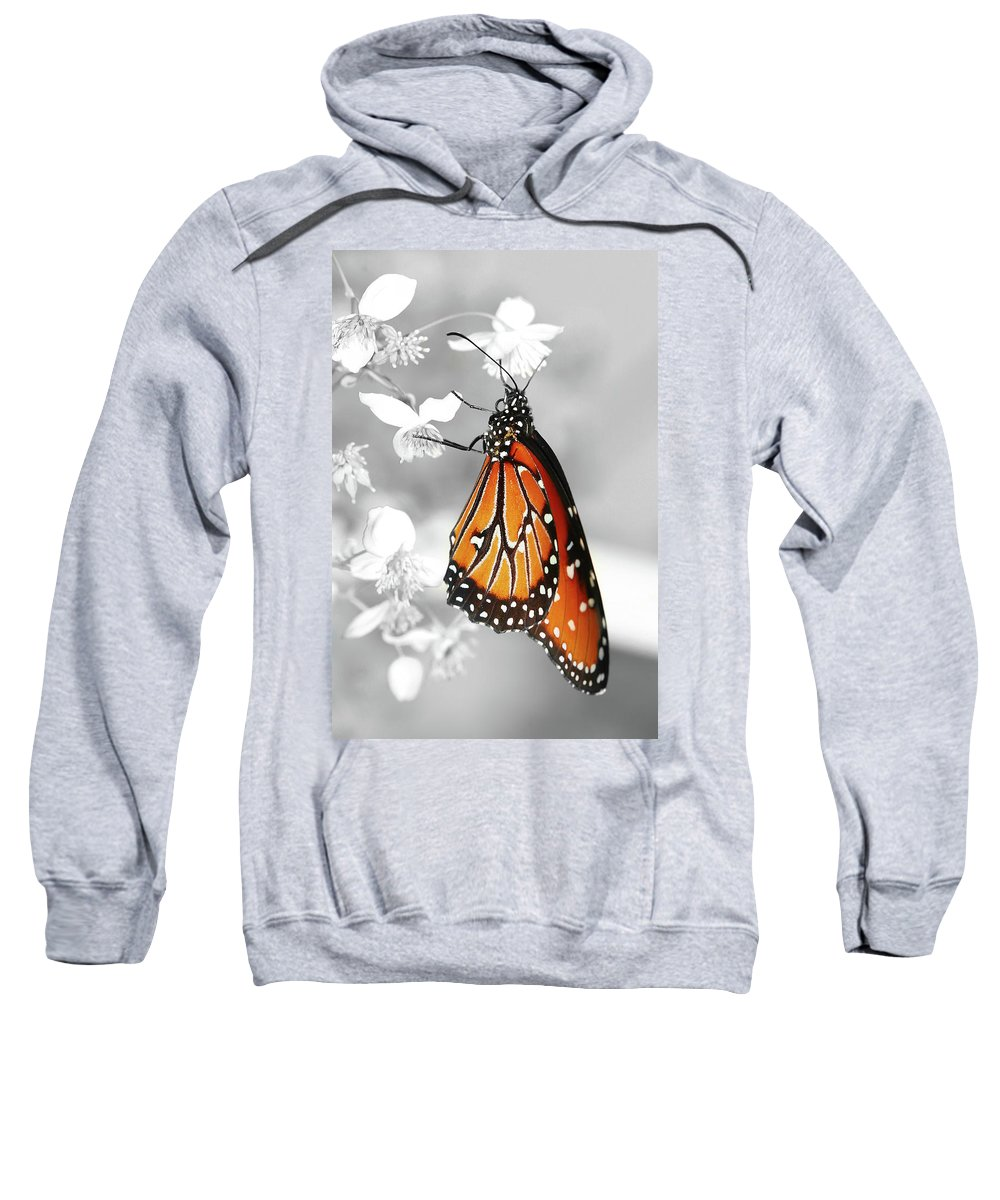Butterflies Sweatshirt featuring the photograph The Queen by Dennis Goodman