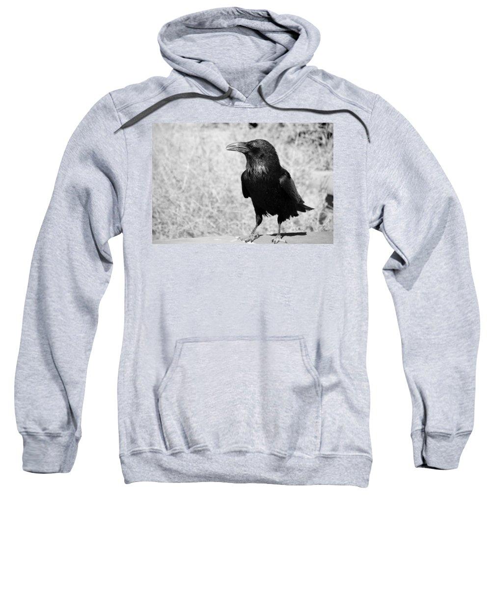 Raven Sweatshirt featuring the photograph The Raven by Susanne Van Hulst