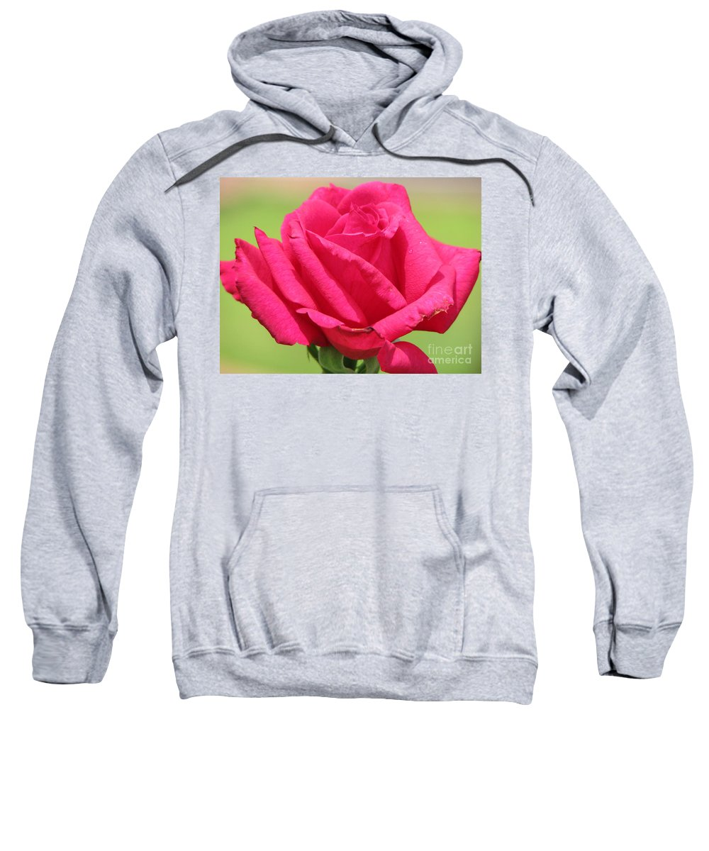 Roses Sweatshirt featuring the photograph The Rose by Amanda Barcon