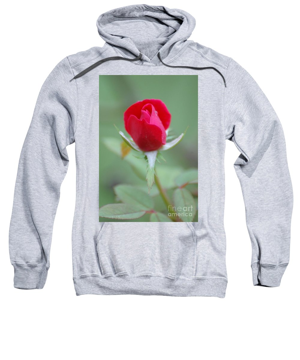Rose Sweatshirt featuring the photograph The Rosebud by Donna Bentley