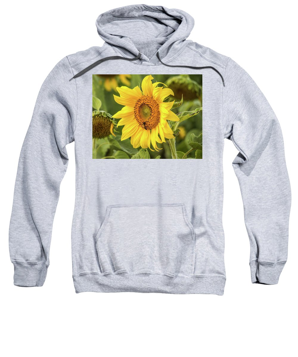 Flower Sweatshirt featuring the photograph The Sunflower by Nathaniel H Broughton