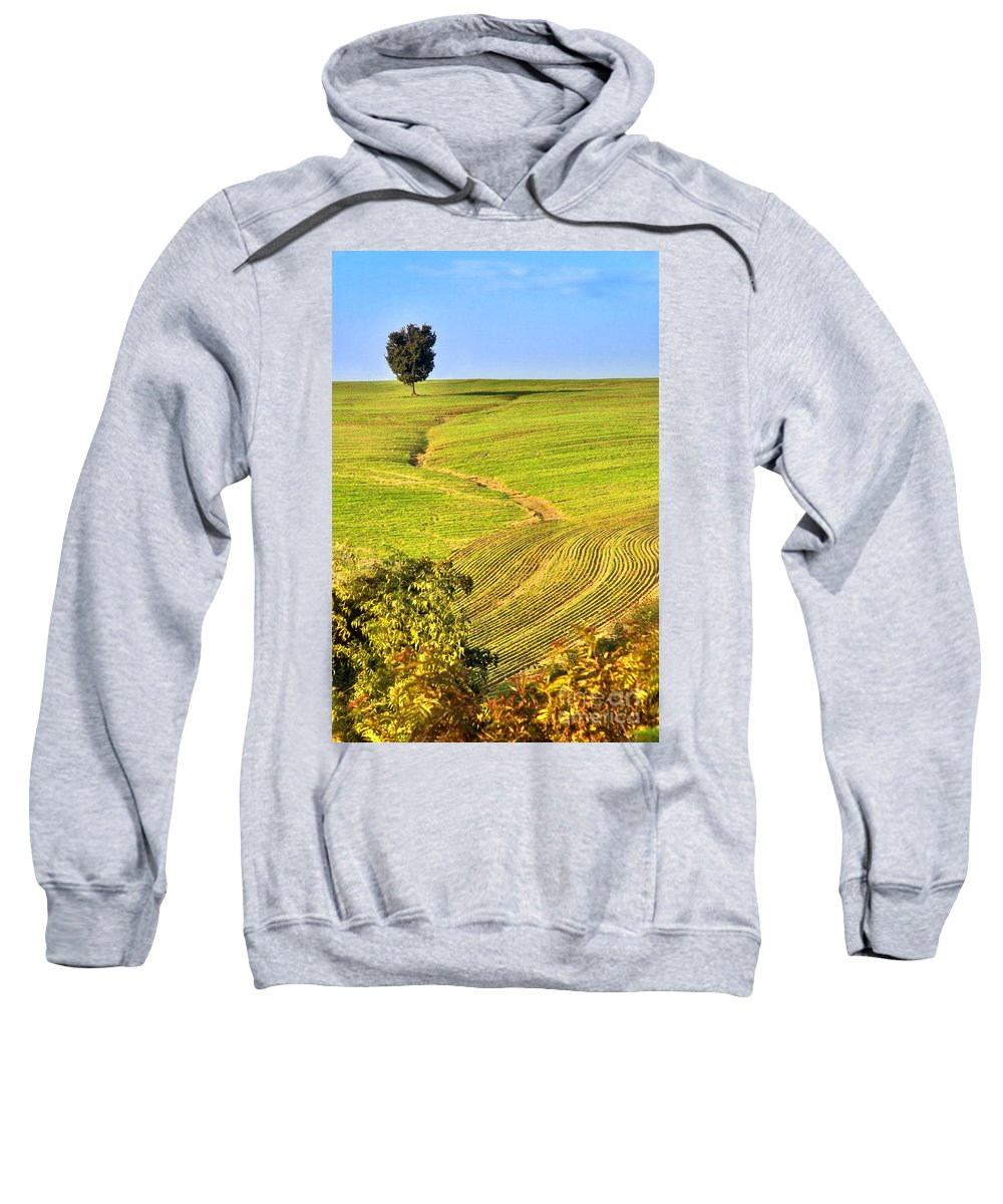 Tree Sweatshirt featuring the photograph The Tree And The Furrows by Silvia Ganora