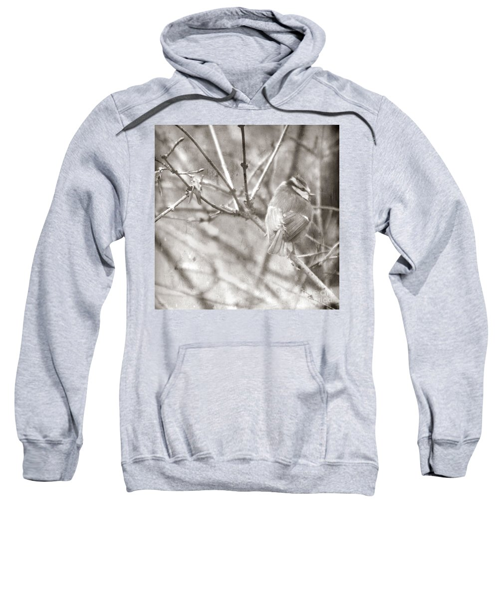 Blue Tit Sweatshirt featuring the photograph The Winter Time by Angel Ciesniarska