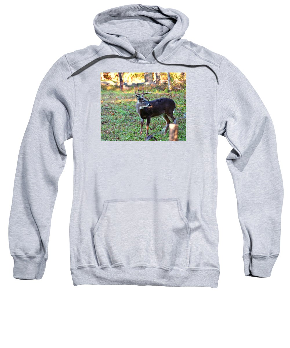 Ann Keisling Sweatshirt featuring the photograph There Is A Twig Stuck In My Antlers by Ann Keisling