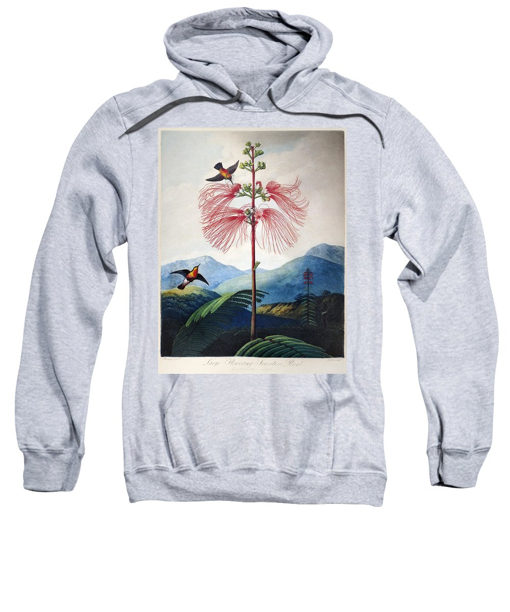 1799 Sweatshirt featuring the photograph Thornton: Sensitive Plant by Granger