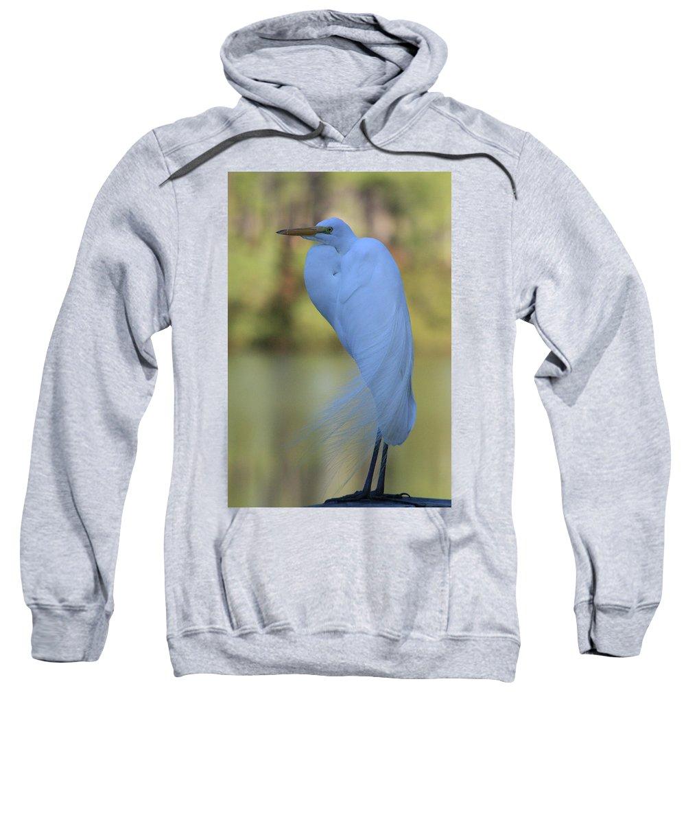 Heron Sweatshirt featuring the photograph Thoughtful Heron by Kim Henderson