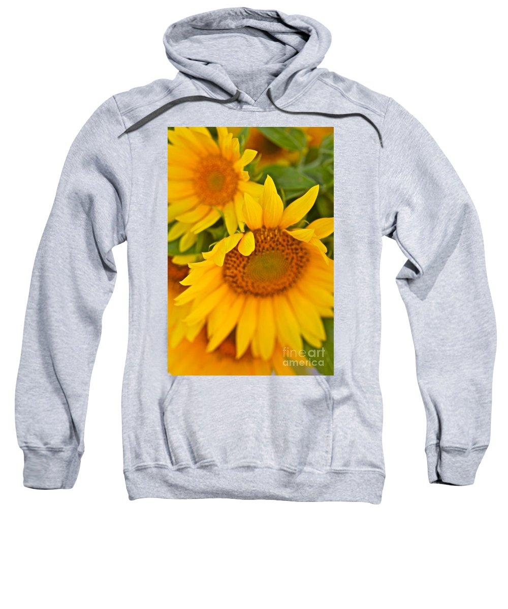 Yellow Sweatshirt featuring the photograph Three Sunflowers by Nadine Rippelmeyer