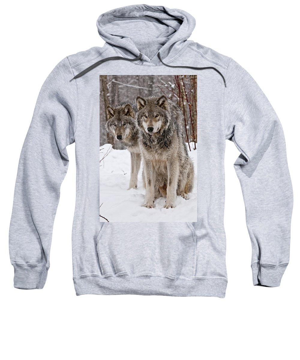 Michael Cummings Sweatshirt featuring the photograph Timber Wolves In Winter by Michael Cummings