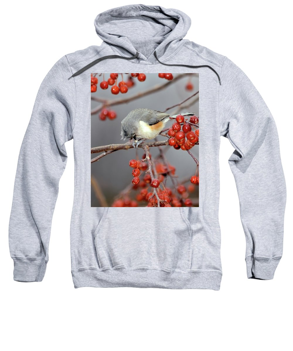 Tufted Titmouse Sweatshirt featuring the photograph Titmouse Breakfast by Betty LaRue