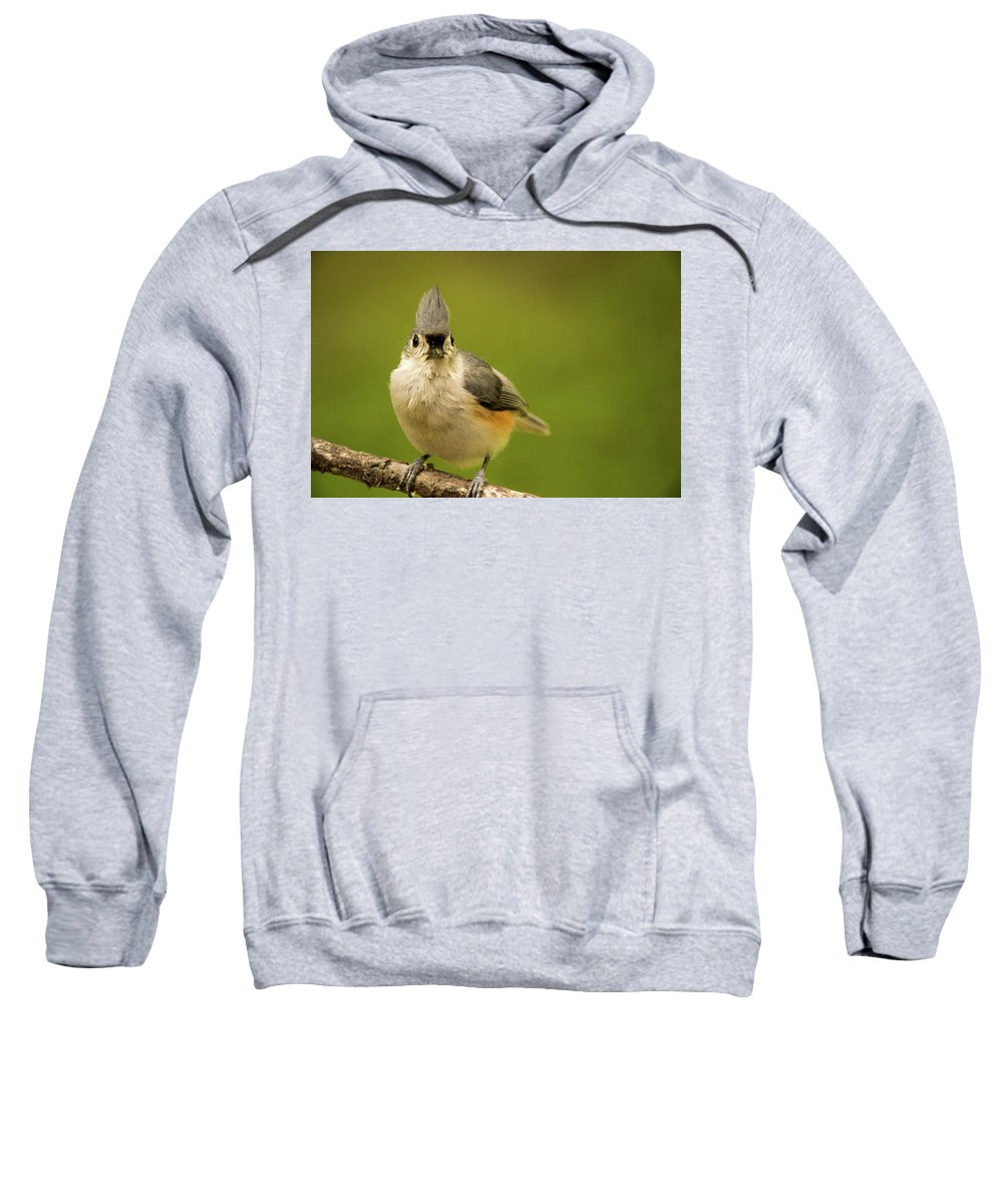 Here Sweatshirt featuring the photograph Titmouse Says Here Is Looking At You by Douglas Barnett