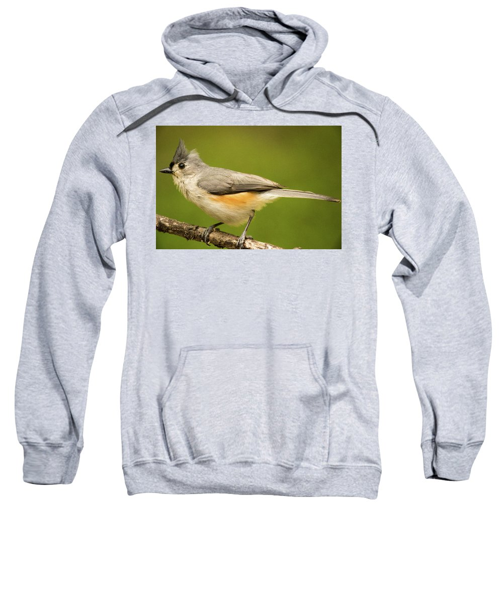 Bad Sweatshirt featuring the photograph Titmouse With Bad Hairdo 3 by Douglas Barnett