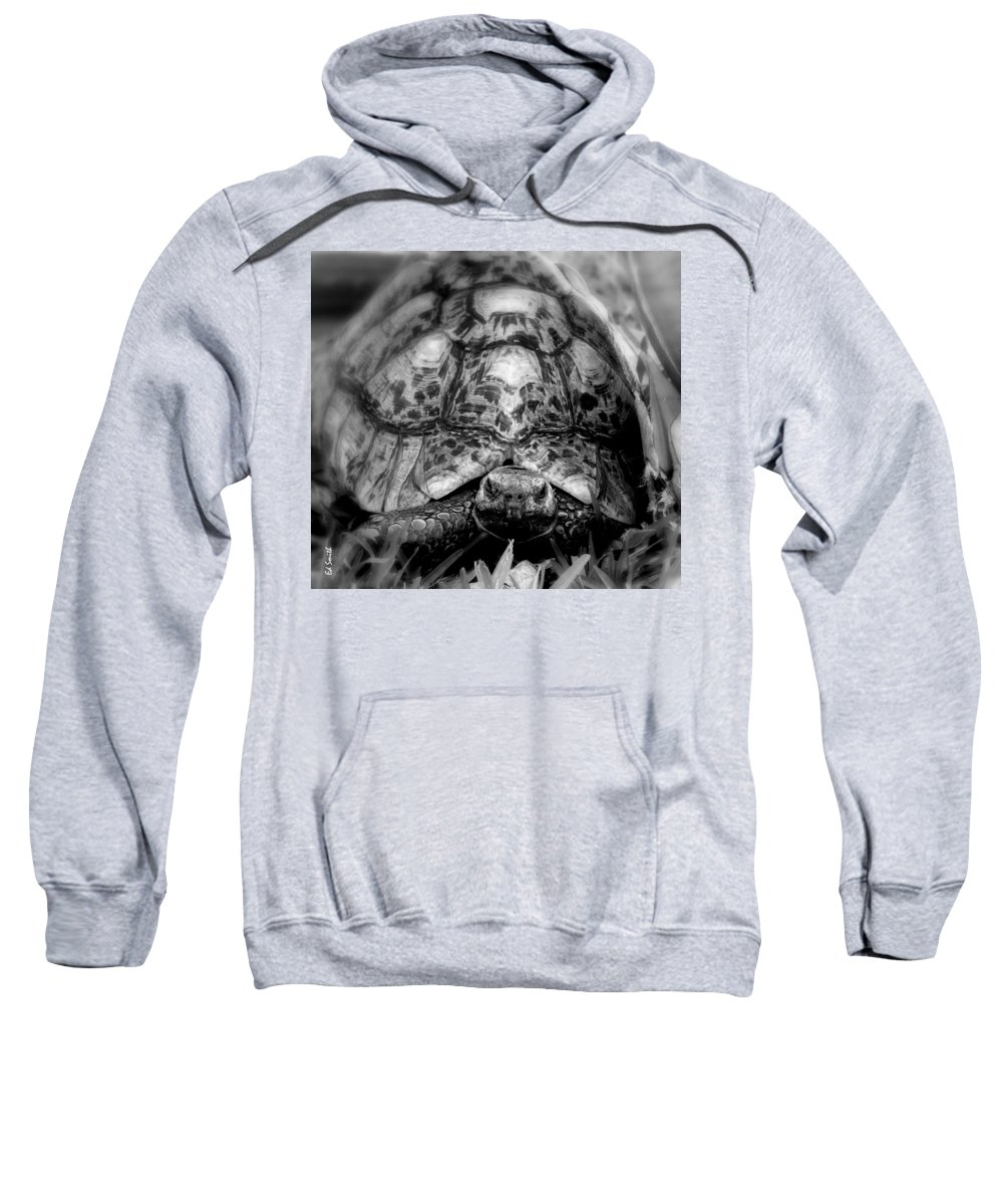 Tortalicious Sweatshirt featuring the photograph Tortalicious by Edward Smith