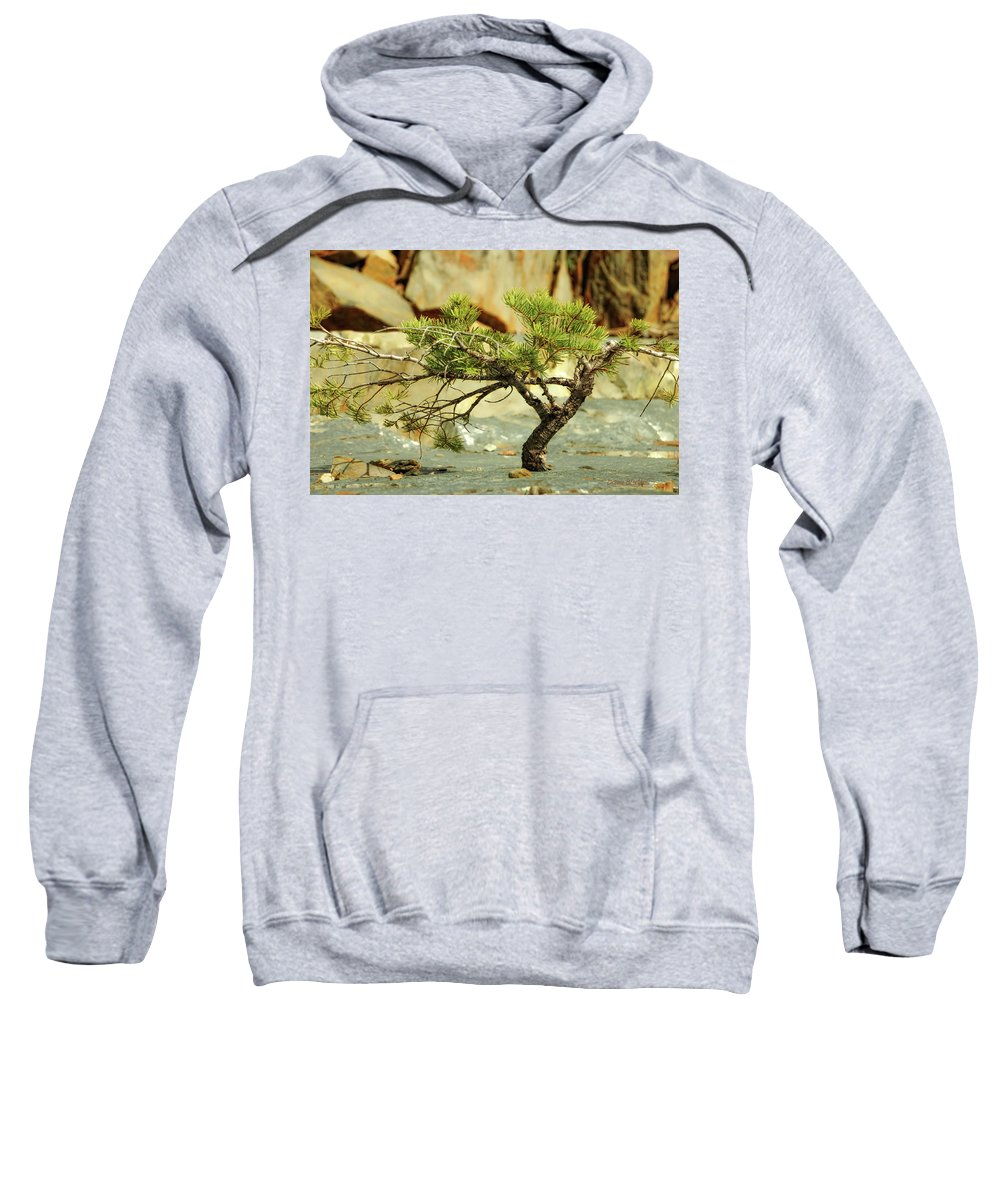 Tree Sweatshirt featuring the photograph Tough Upbringing by Donna Blackhall