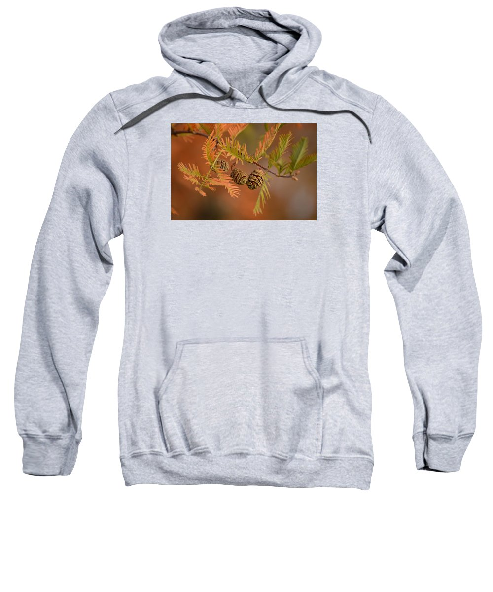 Macro Sweatshirt featuring the photograph Tree Babies by Karly Lark