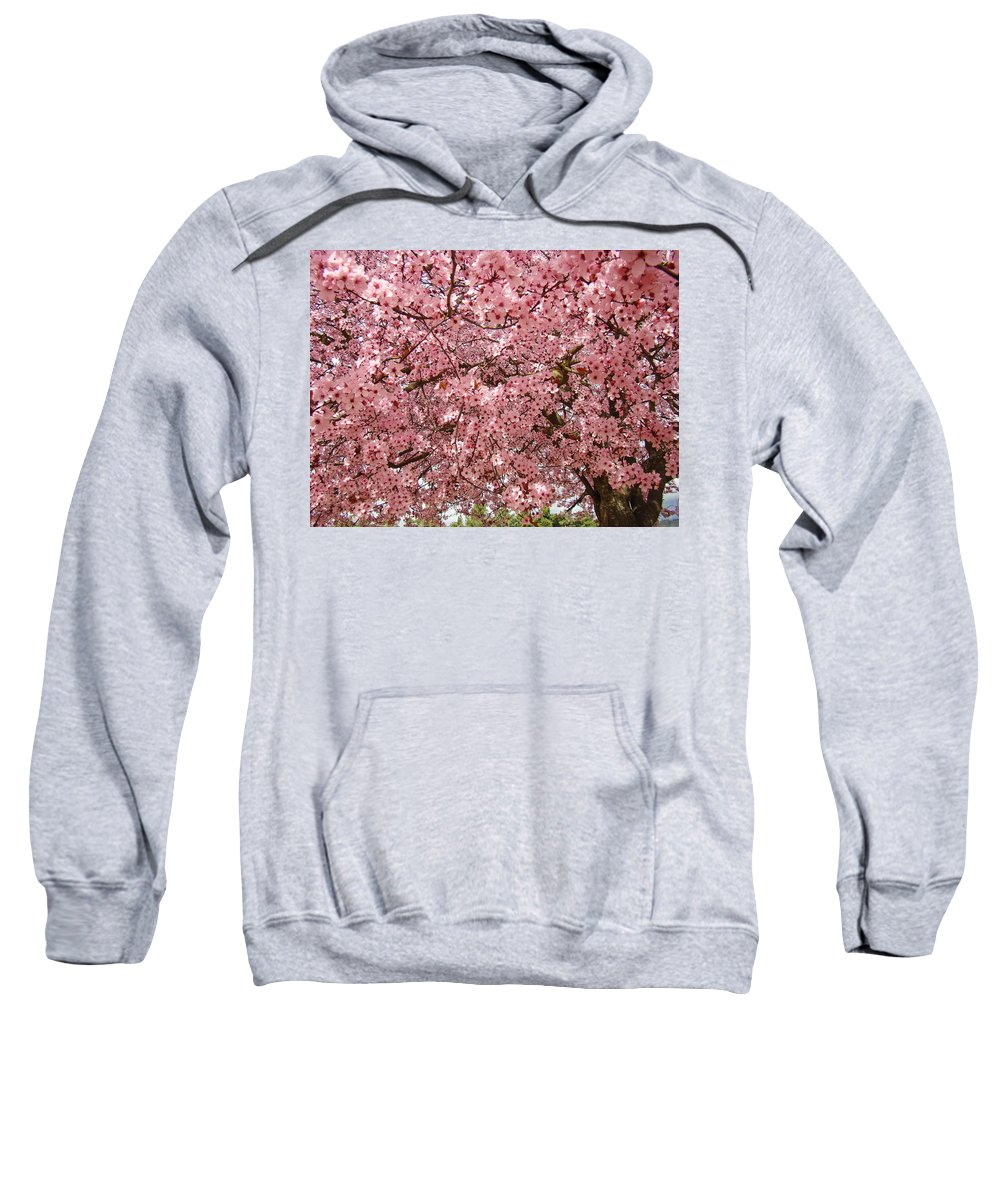 Tree Sweatshirt featuring the photograph Tree Blossoms Pink Blossoms Art Prints Giclee Flower Landscape Artwork by Baslee Troutman