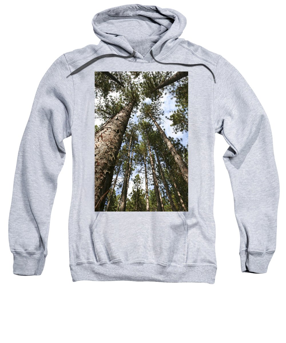Autumn Sweatshirt featuring the photograph Tree Stand by Margie Wildblood