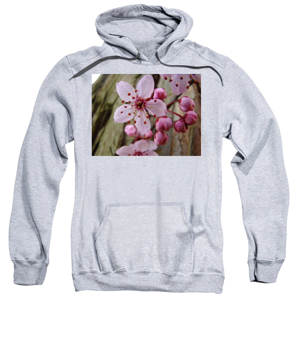 Blossoms Sweatshirt featuring the photograph Trees Art Prints Canvas Pink Blossoms Spring Blue Sky Baslee Troutman by Baslee Troutman